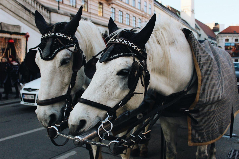 A horse-drawn carriage in Vienna, Austria during Christmas