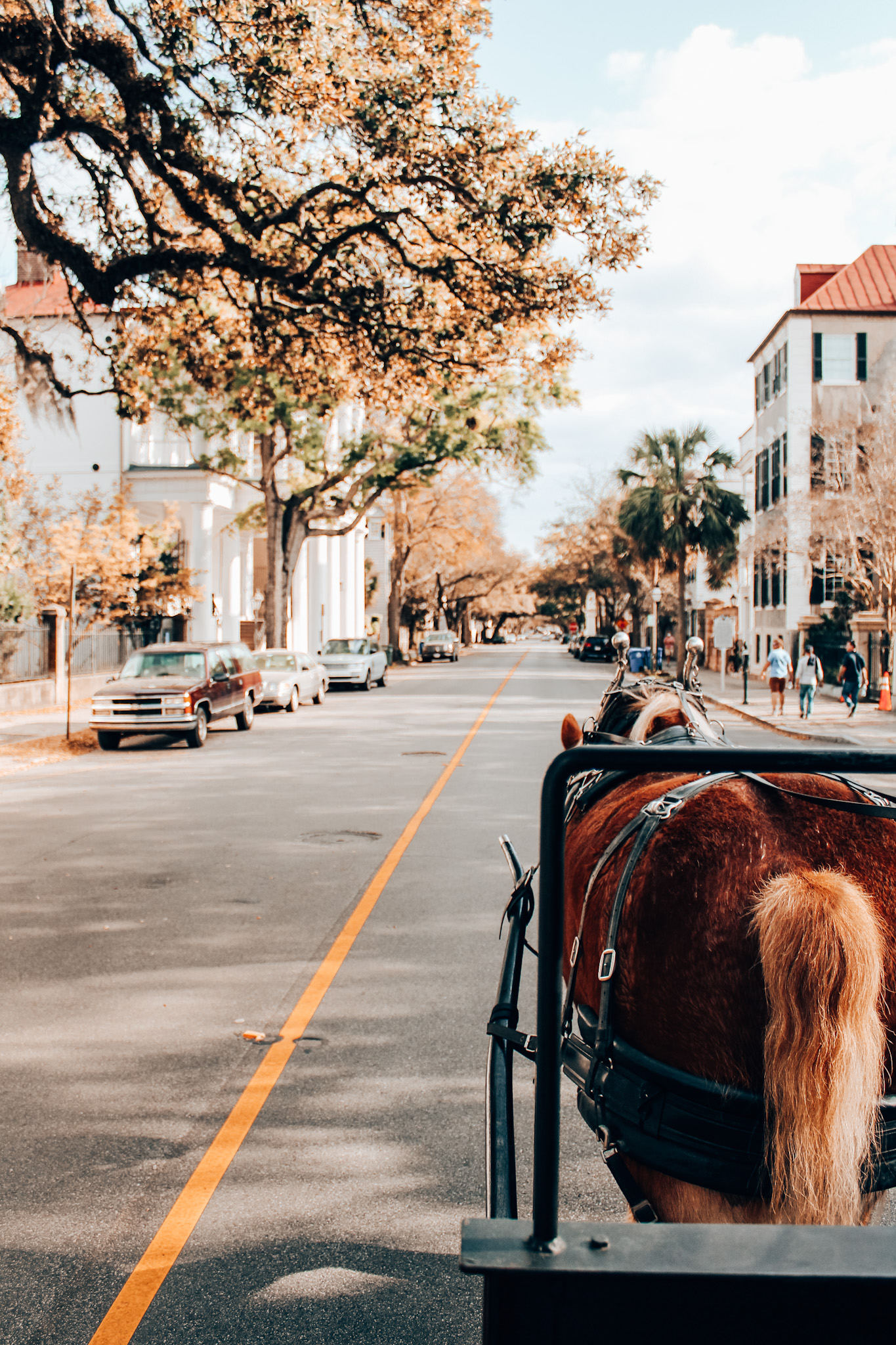 Charleston carriage tour during a 3 day Charleston itinerary