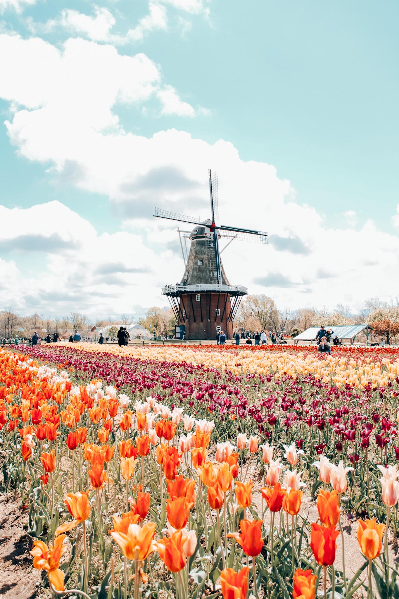 Holland, Michigan Tulip Time festival